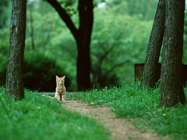 japanese cute cat