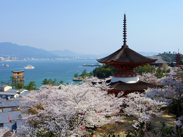 itsukushima and sakura