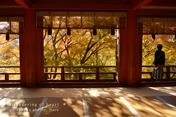 20131129_photoblog_beautiful autumn day at shrine