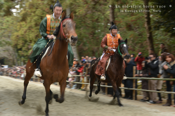 20131222_photoblog_japanese horse race