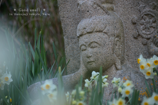 20140206_photoblog_statue and daffodils at hannyaji temple