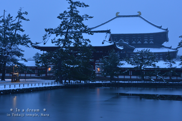20140216_photoblog_white todaiji temple
