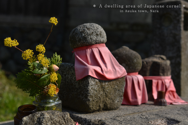 20140330_photoblog_stony statues and japanese cornel