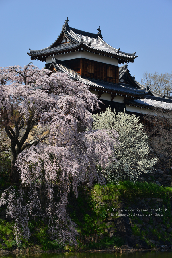 20140406_photoblog_spring has come to yamatokamigori castle