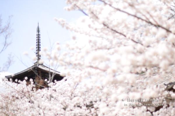20140411_photoblog_horyuji temple
