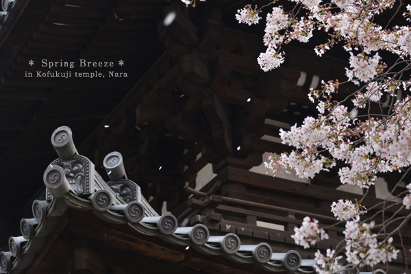20140427_photoblog_cherry blossoms of kofuku-ji temple
