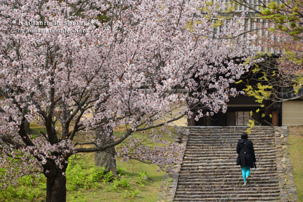 20140427_photoblog_kaidan-in in spring