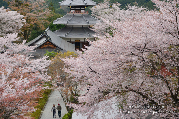 20140515_photoblog_palace of cherry blossom