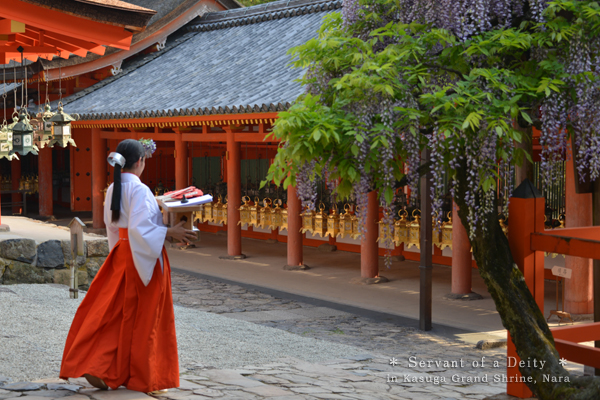 20140524_photoblog_miko, the shrine maiden