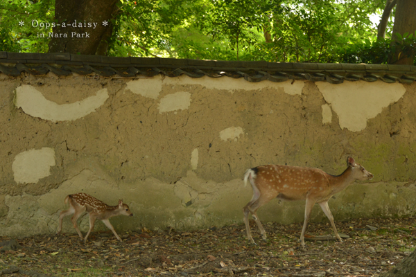 20140619_photoblog_mum and child deer in nara park