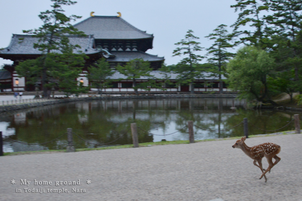 20140720_photoblog_todai_ji temple