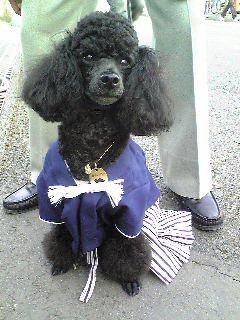 kimono_dog