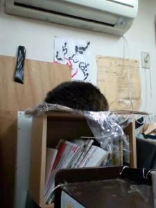 0 yen shop, cat