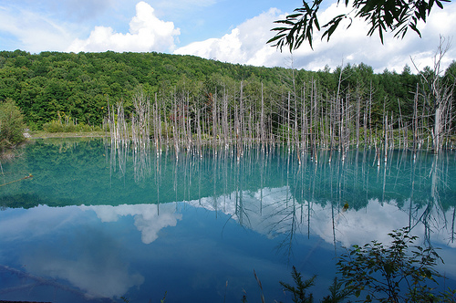 japanese blue pond