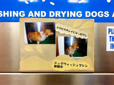 dog washing machine