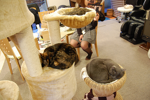 """Neko cafe. """"やまある"""" some rights reserved. flickr"""