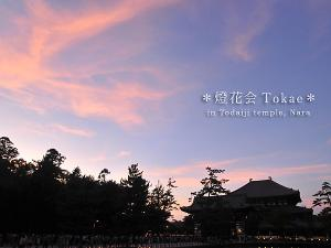 [Photoblog] Evening Scene at Todai-ji
