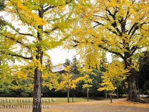 [Photoblog] Ginkgo Trees Street in Todaiji Temple