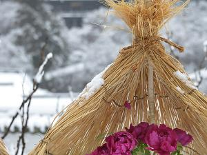 [Photoblog] Winter Tree Peony in Hase-dera Temple