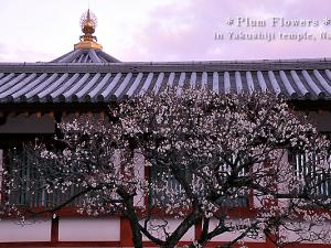 [Photoblog] Plum Flowers of Yakushiji Temple