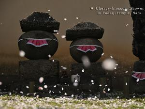 [Photoblog] Stone Statues of Buddha and Cherry Petals