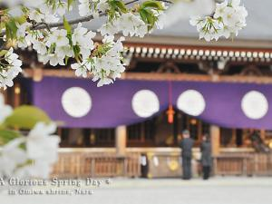[Photoblog] Omiwa Shrine in Spring
