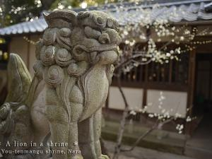 [Photoblog] Lion in Youtenmangu Shrine