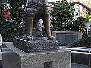 Hachiko --- Japanese famous dog!