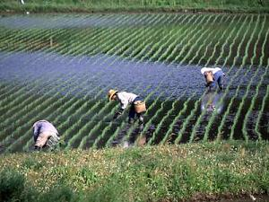 Agriculture Boom among Youngs in Japan