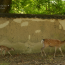 [Photoblog] Mum and Child Deer in Nara Park