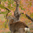[Photoblog] Deer and Coloured Leaves